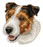 Parson Jack Russell Terrier 11